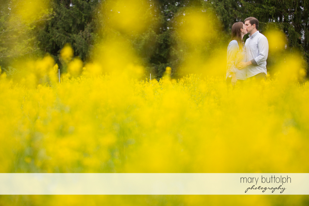 Couple kiss in the garden at the Hamilton Inn Engagement