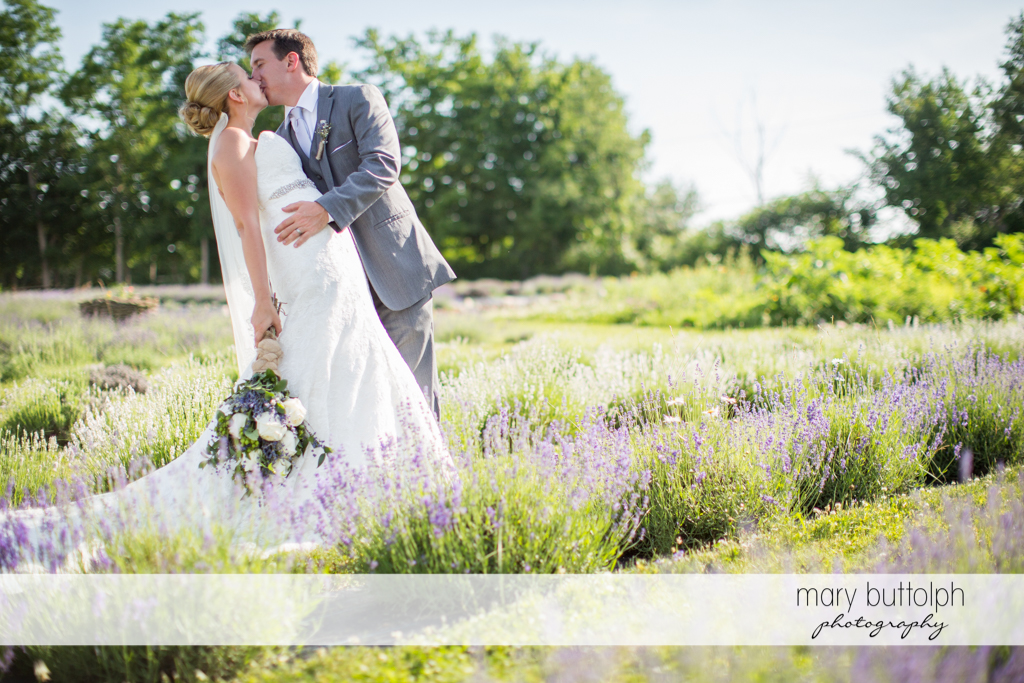 Couple kiss on the field of lavenders at the Sherwood Inn Wedding