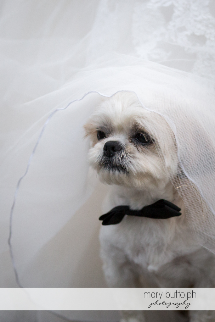 Couple's pet dog is all dressed up for the wedding at Arrowhead Lodge Wedding