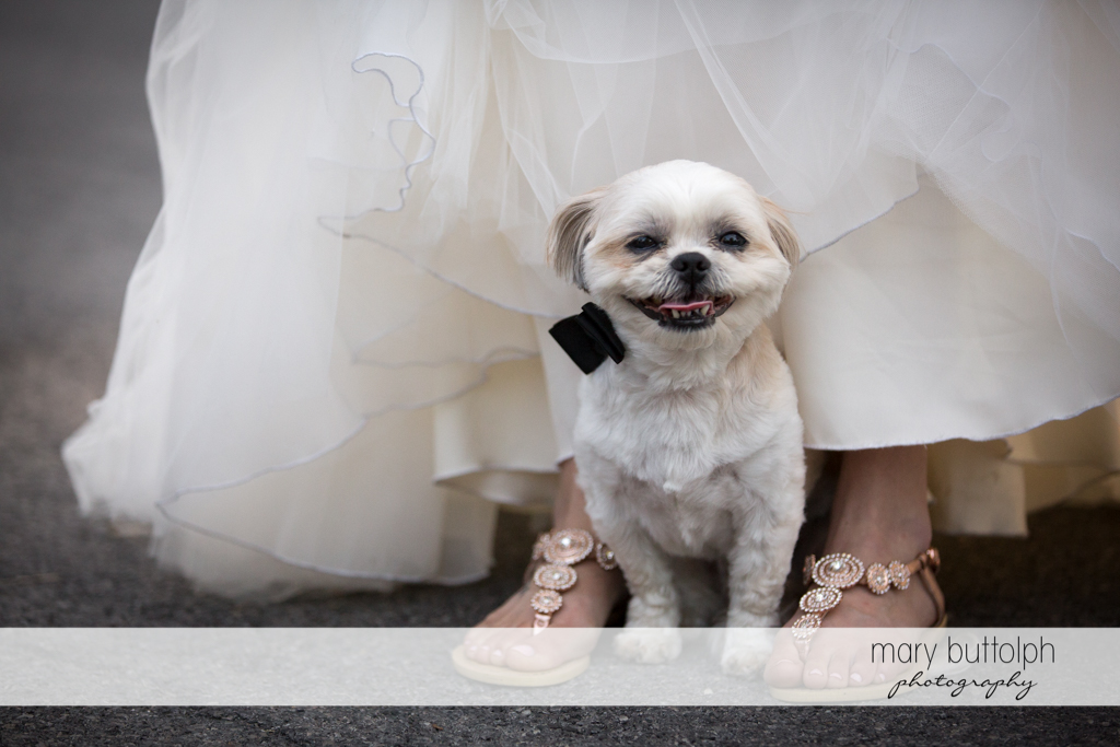 Couple's smiling pet dog stands near the bride at Arrowhead Lodge Wedding
