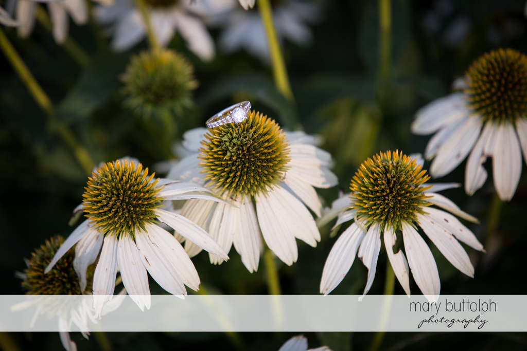 Woman's ring rests on top of a white flower in the garden at Skaneateles Country Club Engagement
