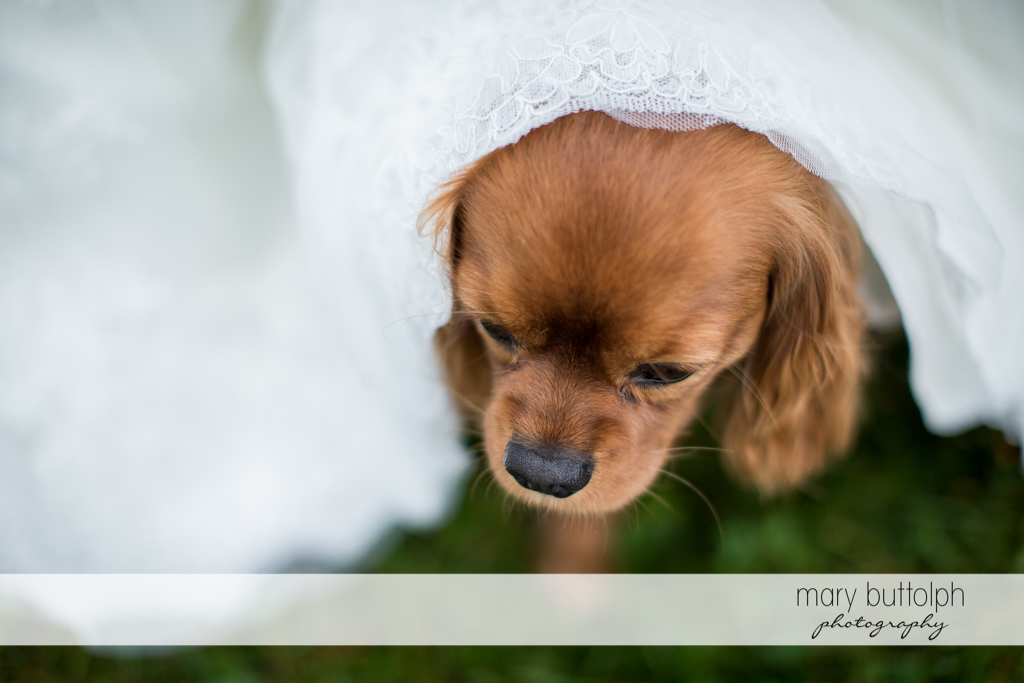 A cute dog is one of the special guests at Anyela's Vineyards Wedding