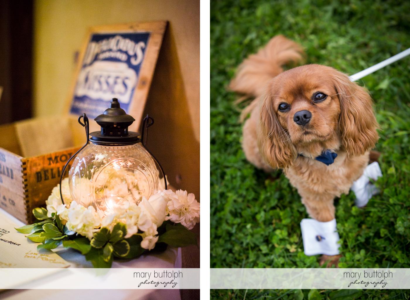 Old lantern and dog at Anyela's Vineyards Wedding