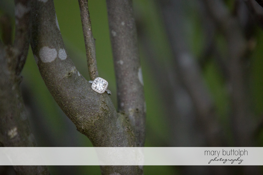 Woman's engagement ring rests on a tree branch at the Inns of Aurora Engagement
