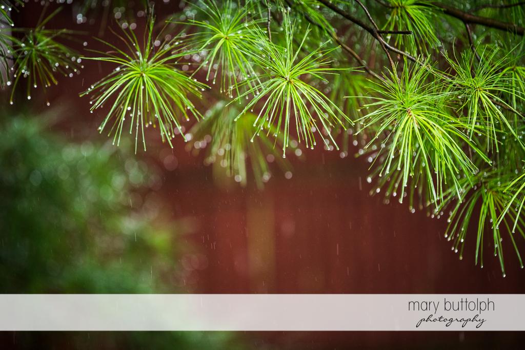 Plants capture the raindrops at the Sherwood Inn Wedding