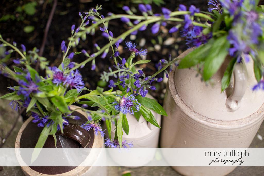 Lavender plants add color to Frog Pond Bed & Breakfast Wedding