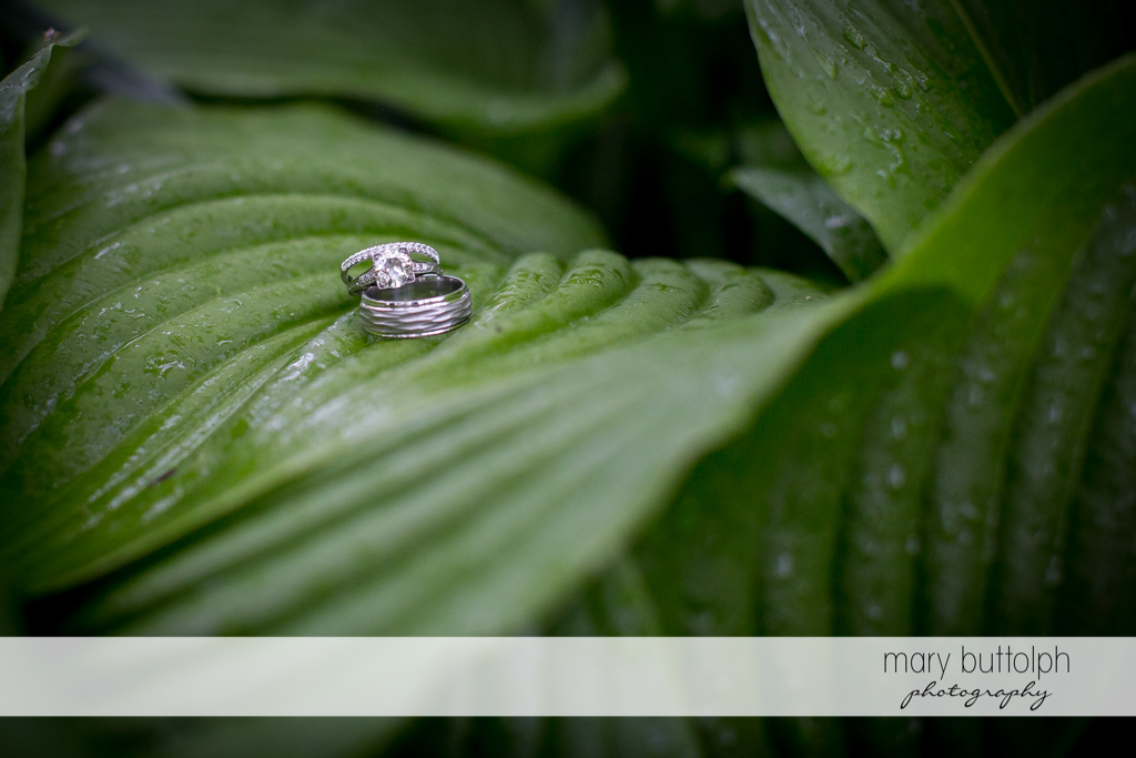 Couple's wedding rings on the leaf of a plant at Frog Pond Bed & Breakfast Wedding