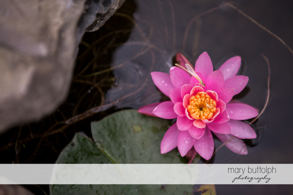 A pink flower floats on the lake at Emerson Park Pavilion Wedding