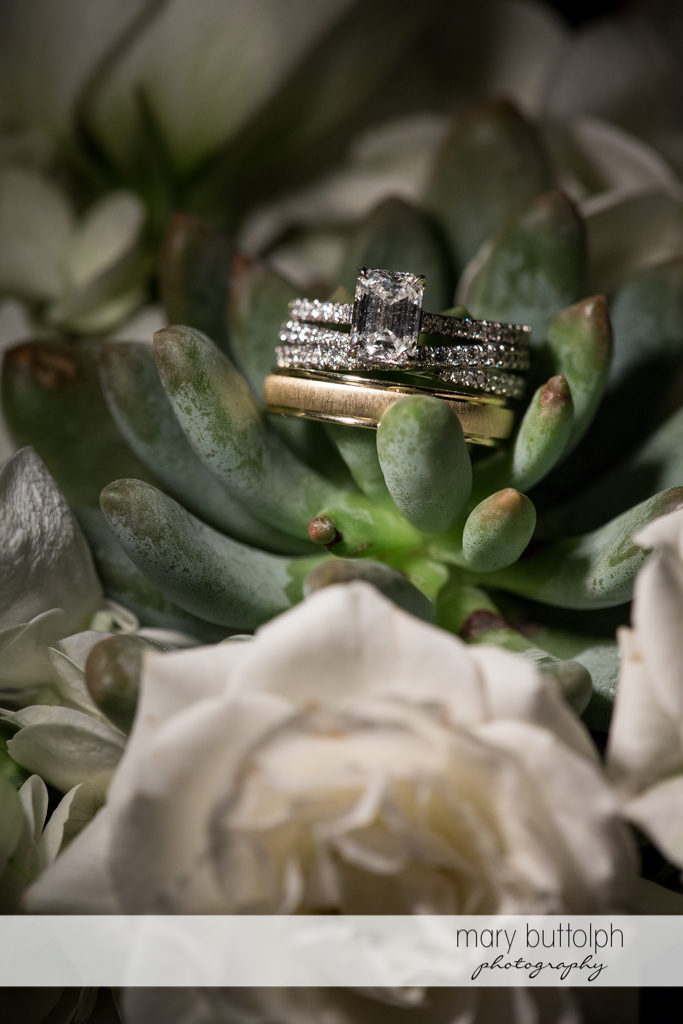 Couple's wedding rings decorate a succulent plant at the Brewster Inn Wedding