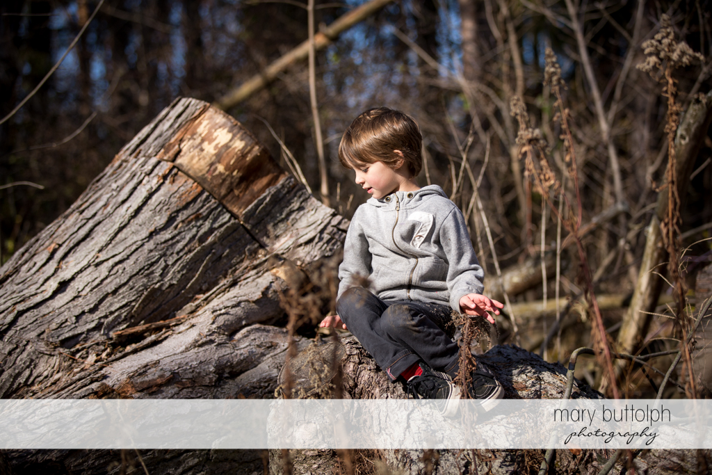 Boy sits on a tree in the garden at Skaneateles