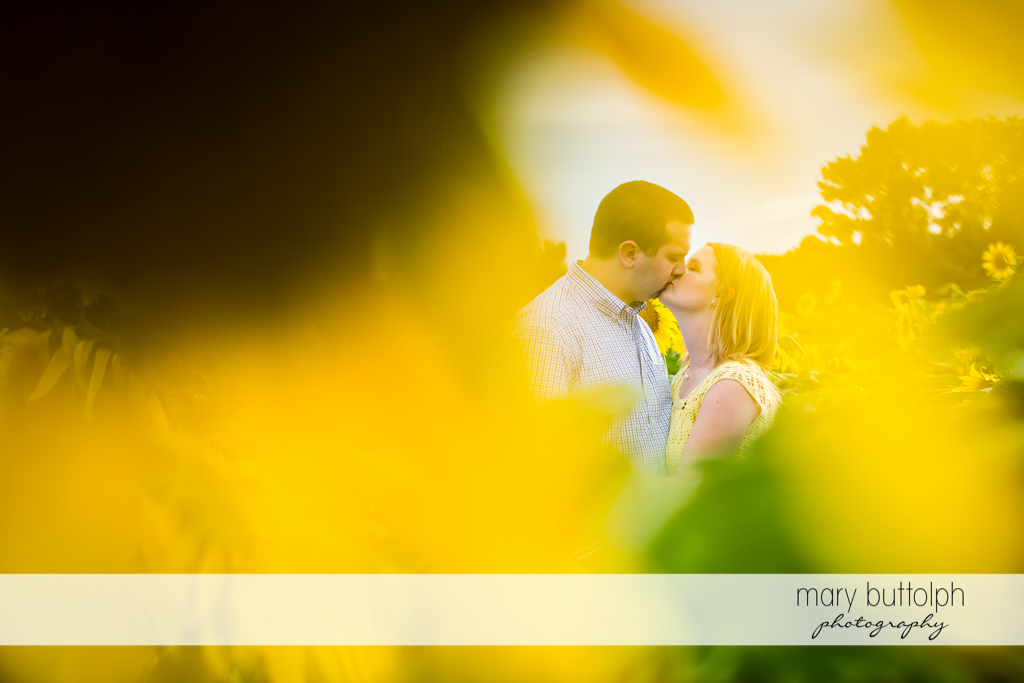 Couple kissing in sunflower garden at Syracuse Engagement