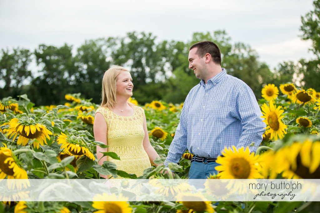 Couple hold hands as they stroll in sunflower field at Syracuse Engagement