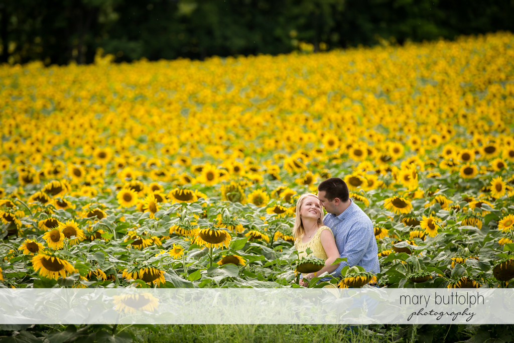 Couple stand out in a field of blooming sunflowers in Syracuse Engagement