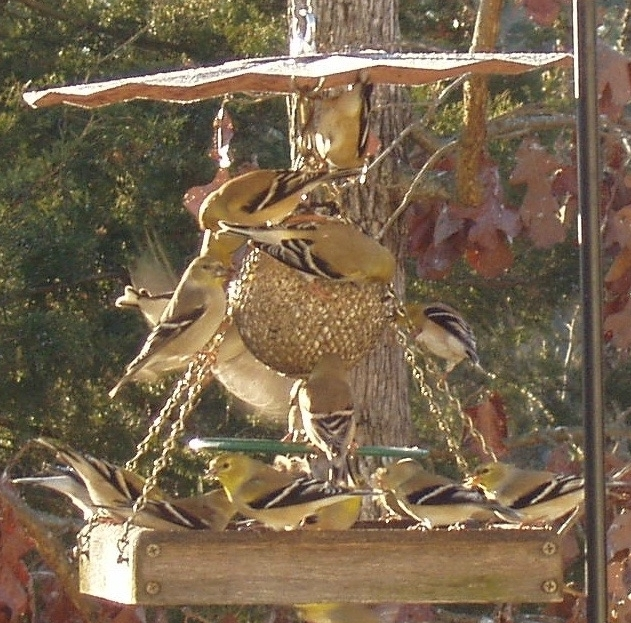 This ball/tray feeder combo makes room for many birds.