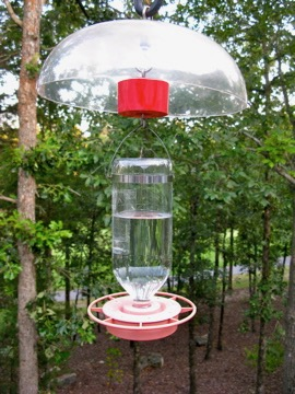 Hummingbird Feeder.jpg
