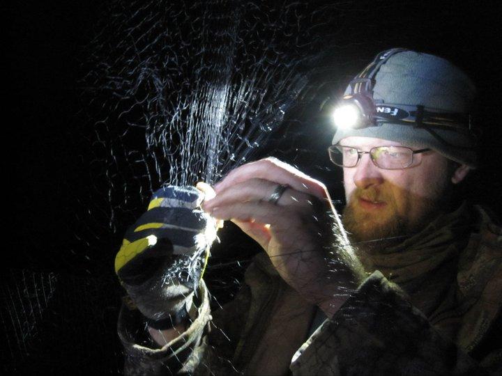 Phillip Jordan removing a bat from a net. Photo by Sara Miller.