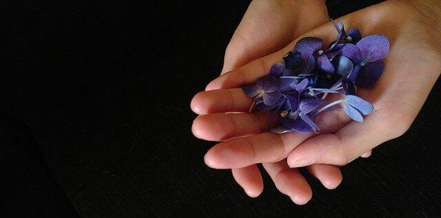 violet-flowers-2091643_640.jpg