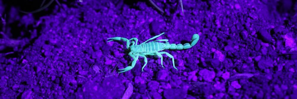 november nummerlogi 11/2 skorpion.jpg