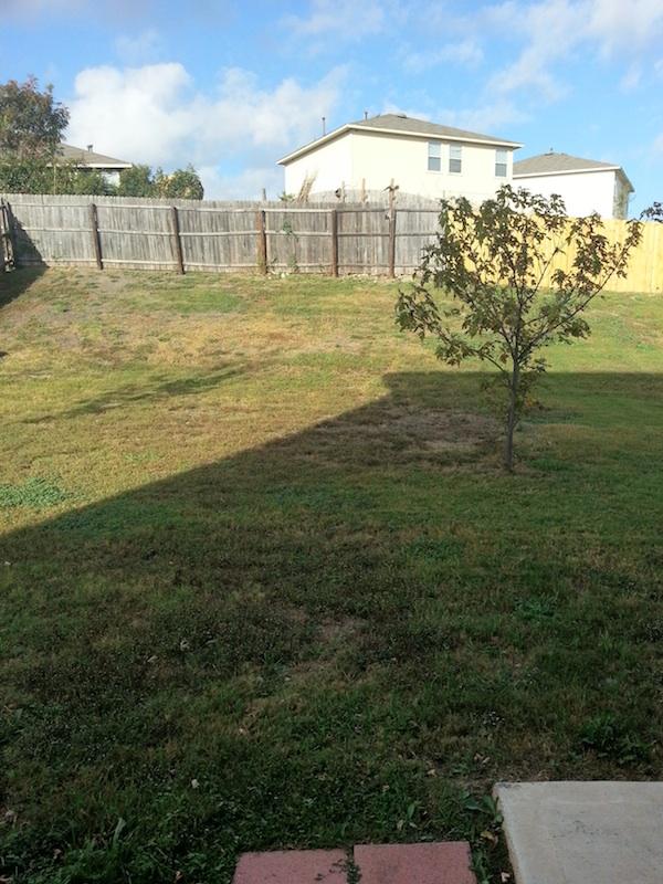 Peppergrass Cv Yard.jpg