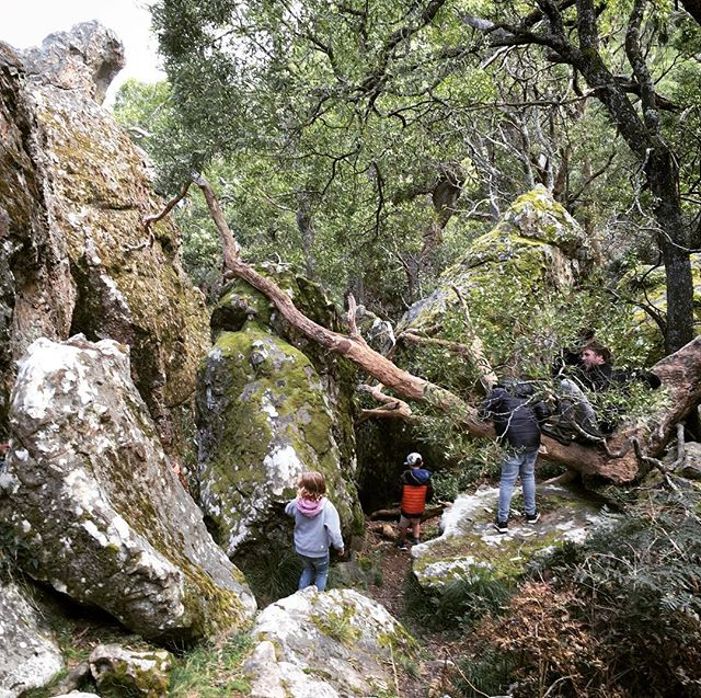 Go forth and explore! #gobranchout #hangingrock #adventureholidays #familyadventure #discovervictoria