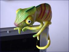 chameleon.jpg