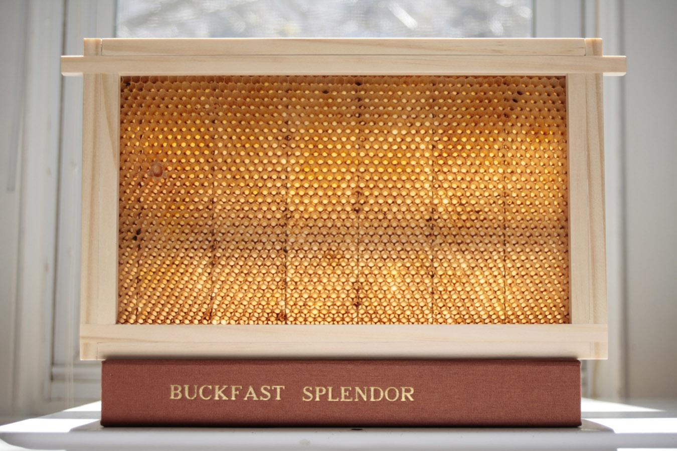 Buckfast_Splendor_BOX_10090.jpg