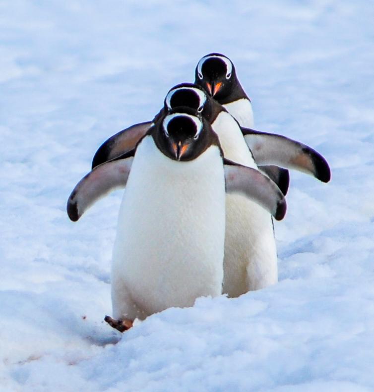 View my Antartica Album