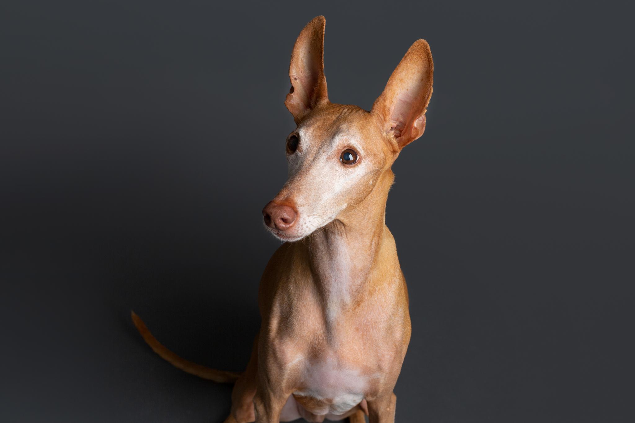 Seattle Dog Photographer 2019-1.jpg