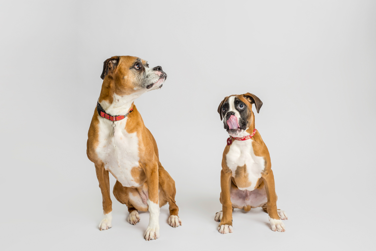 pet-siblings-white-backdrop.jpg