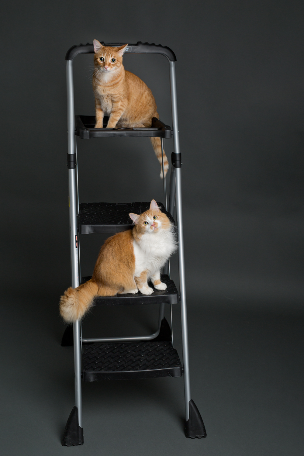 playful-cat-siblings-on-ladder.jpg