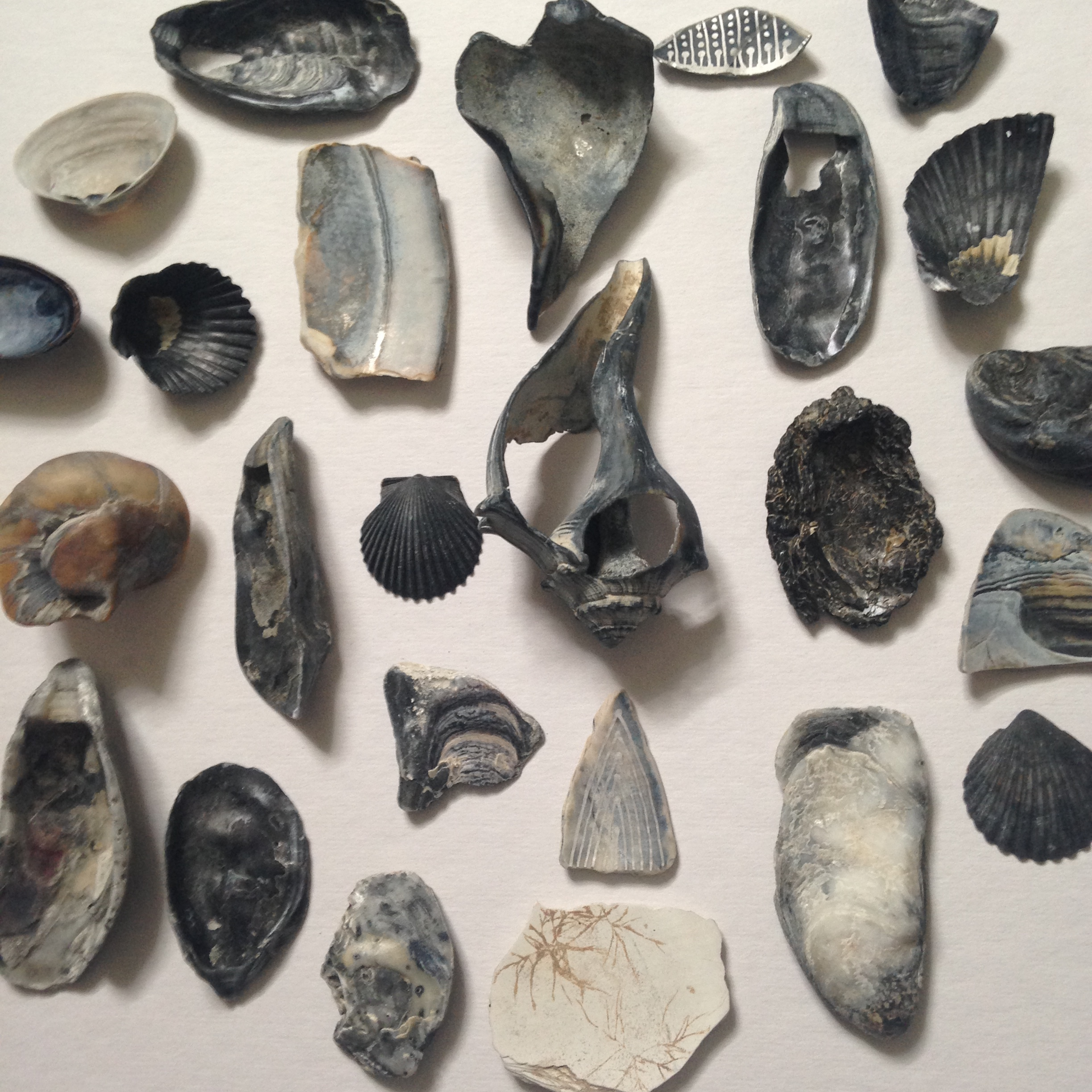 This is maybe a quarter of all the shells I picked up! It got a bit ridiculous and I had to make myself stop picking up shells.