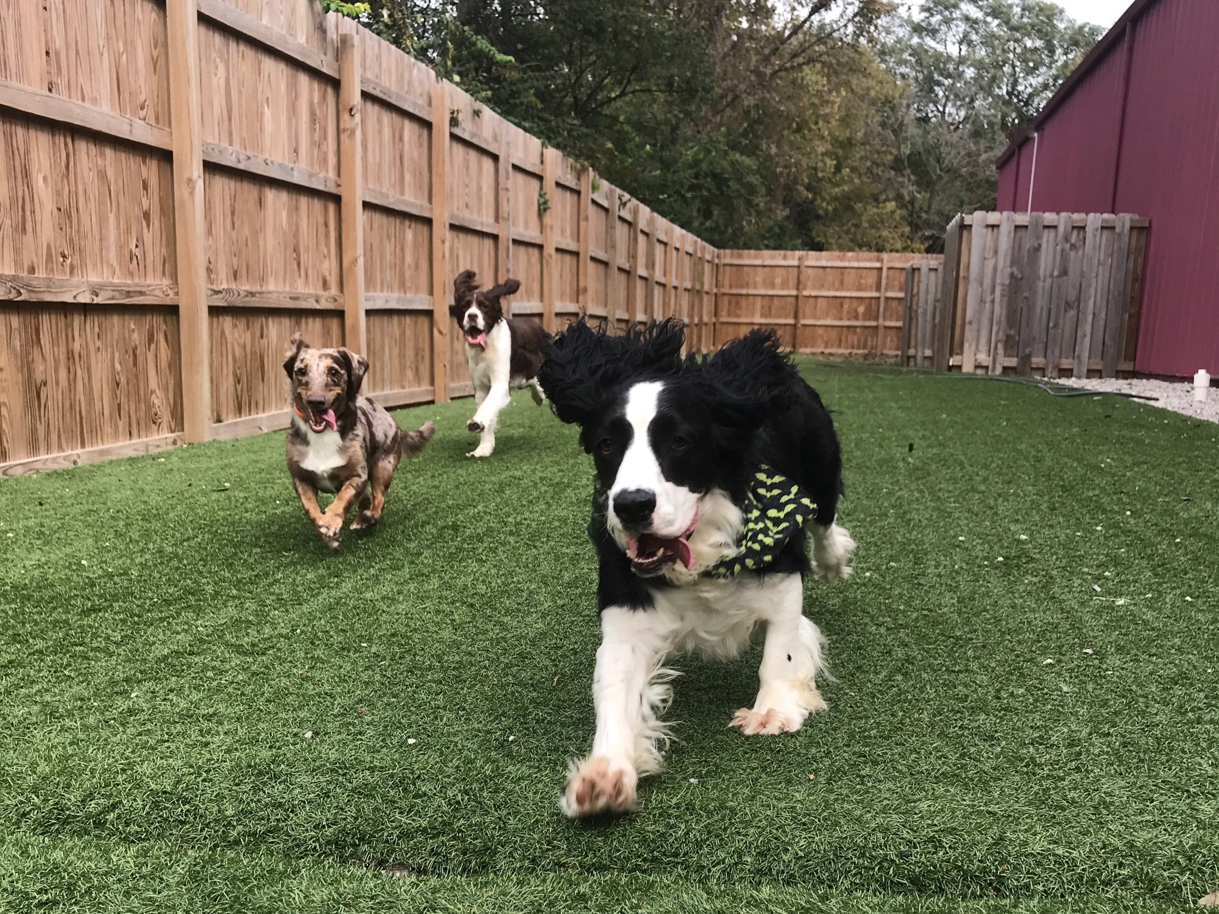 Dog daycare - Daycare can have numerous benefits for dogs and their owners.