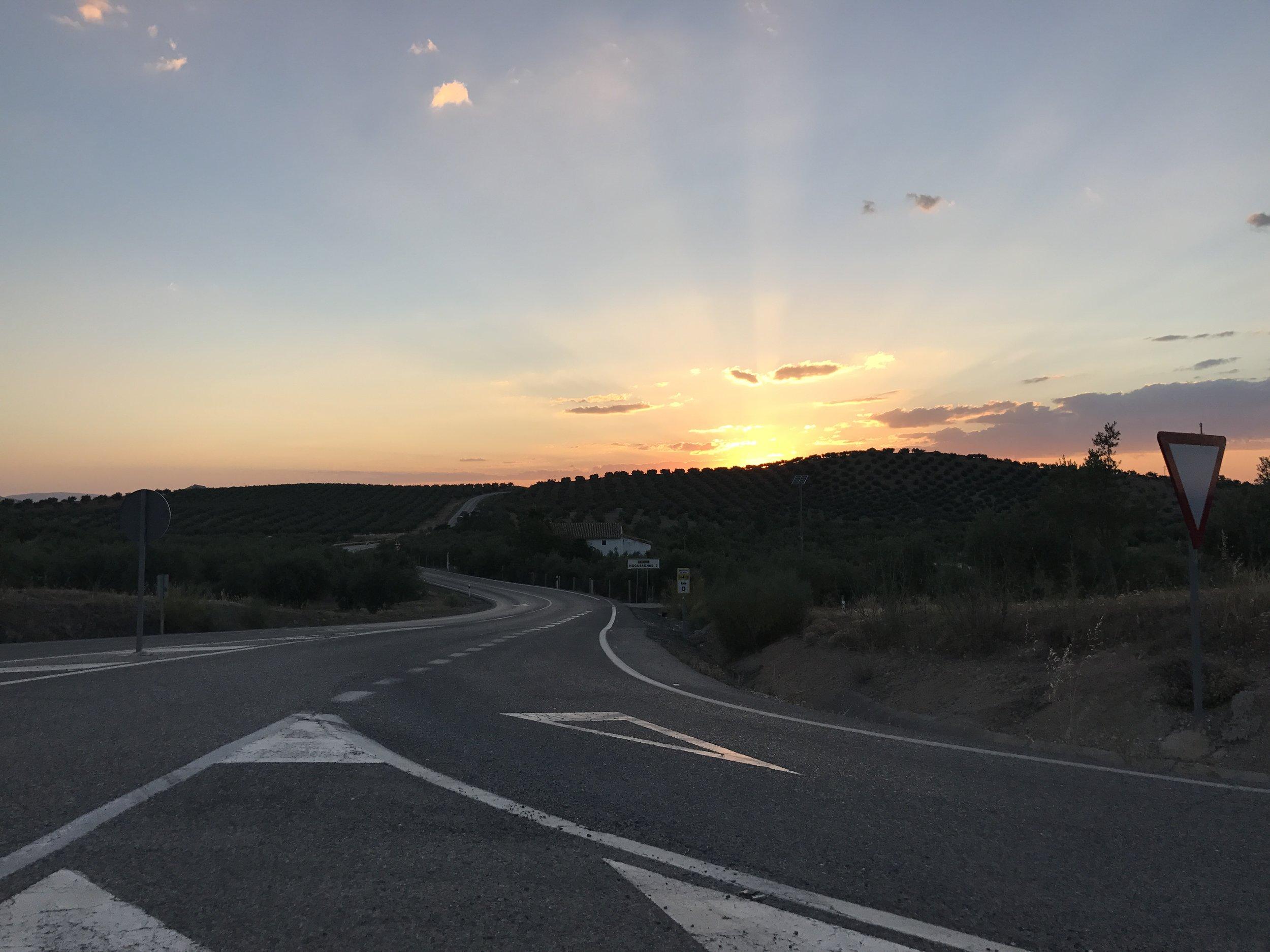 Sunset through Córdoban olives groves