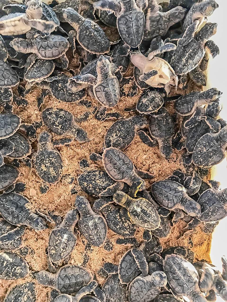baby turtles8.jpg