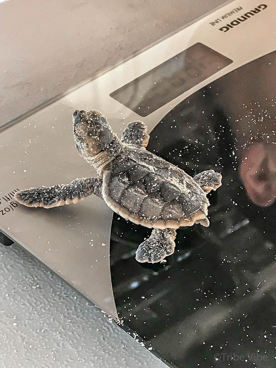 baby turtles3.jpg