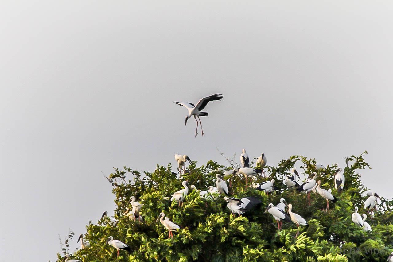 Bird sanctuary Prek Toal Floating village