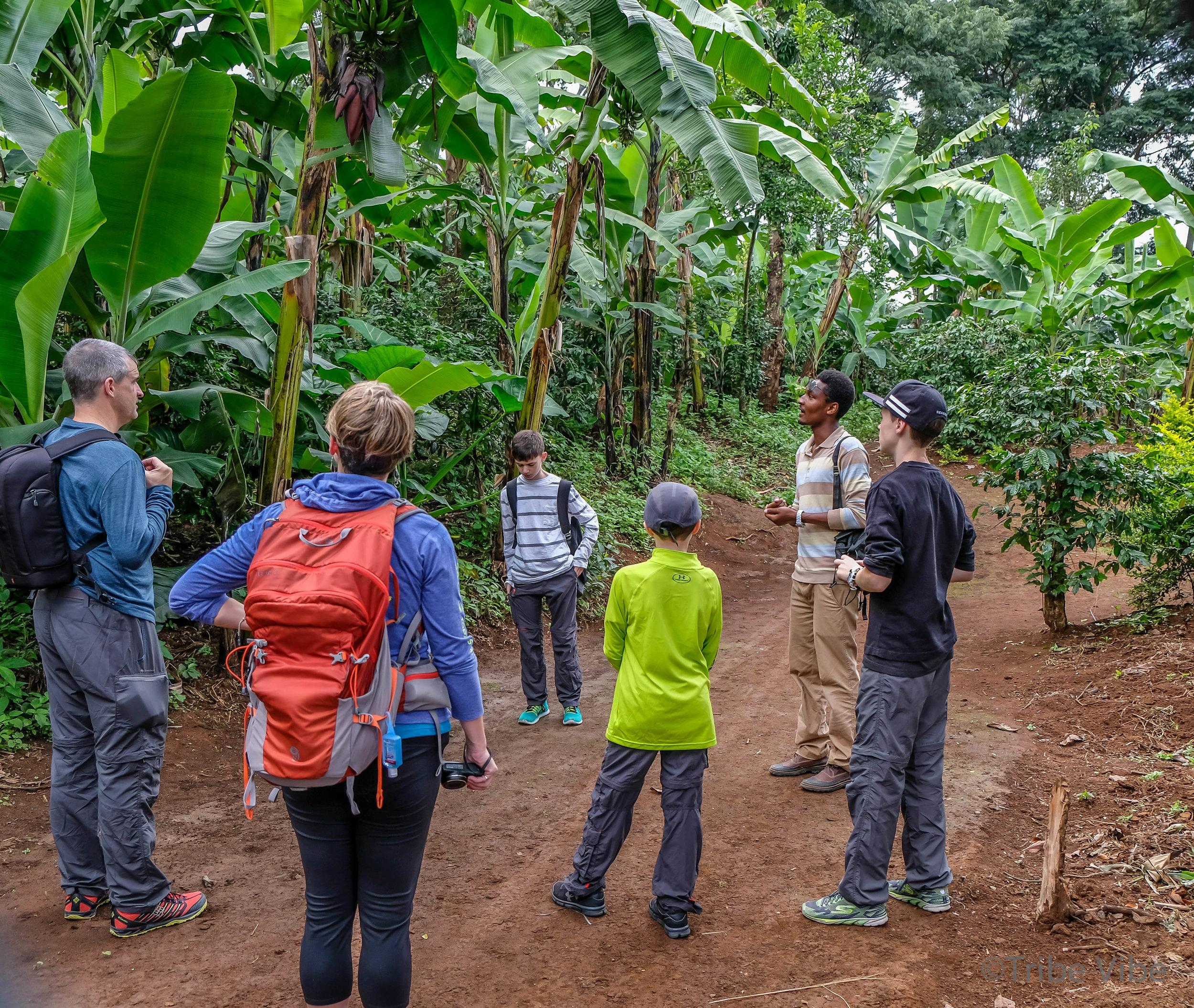 Machame walking trail 5, Kilimanjaro.jpg
