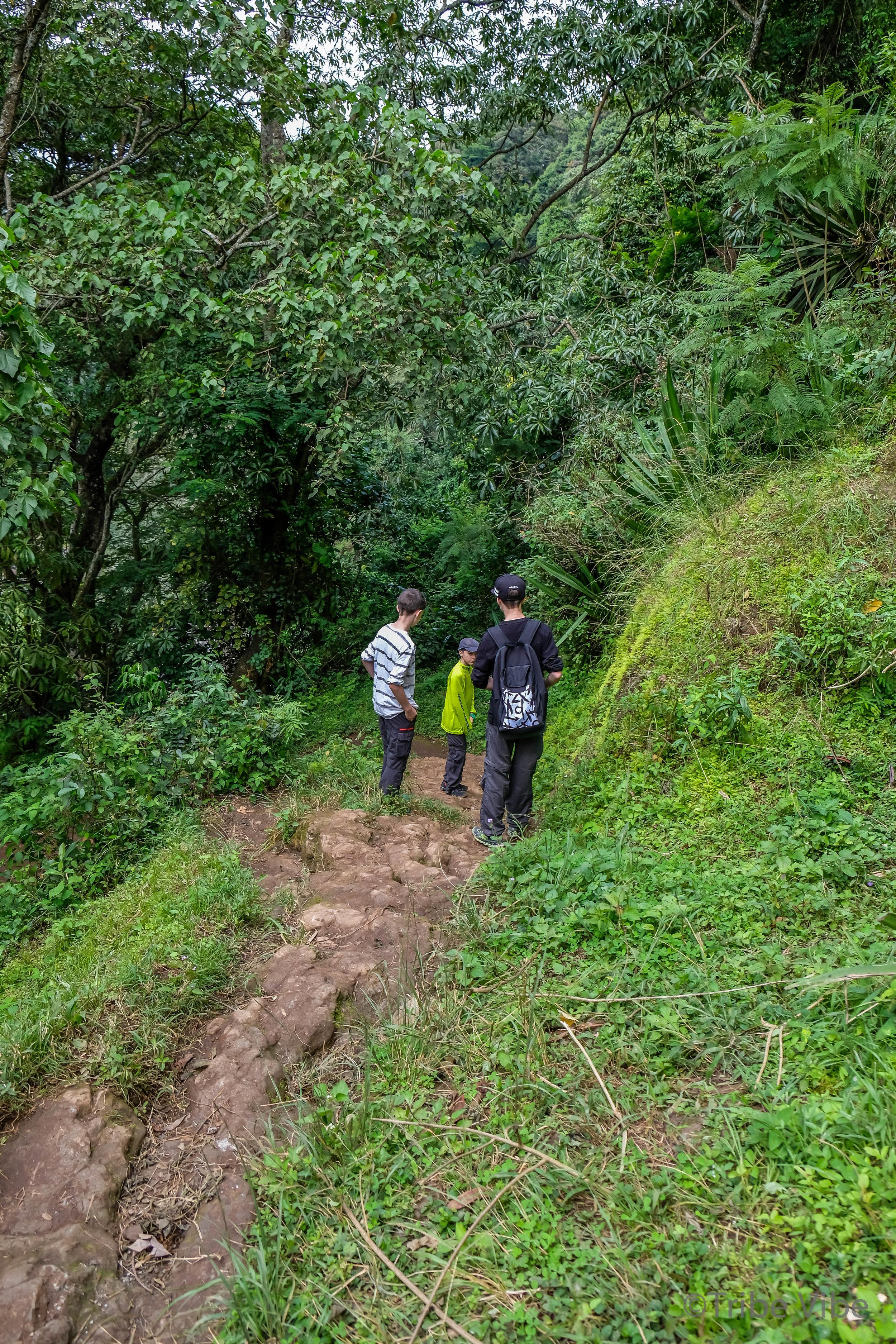 Machame walking trail to the bridge 2, Kilimanjaro.jpg