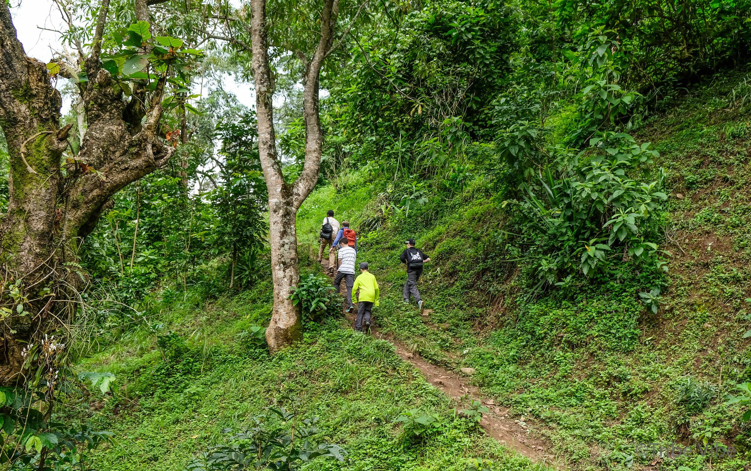 Machame walking trail to the bridge 7, Kilimanjaro.jpg