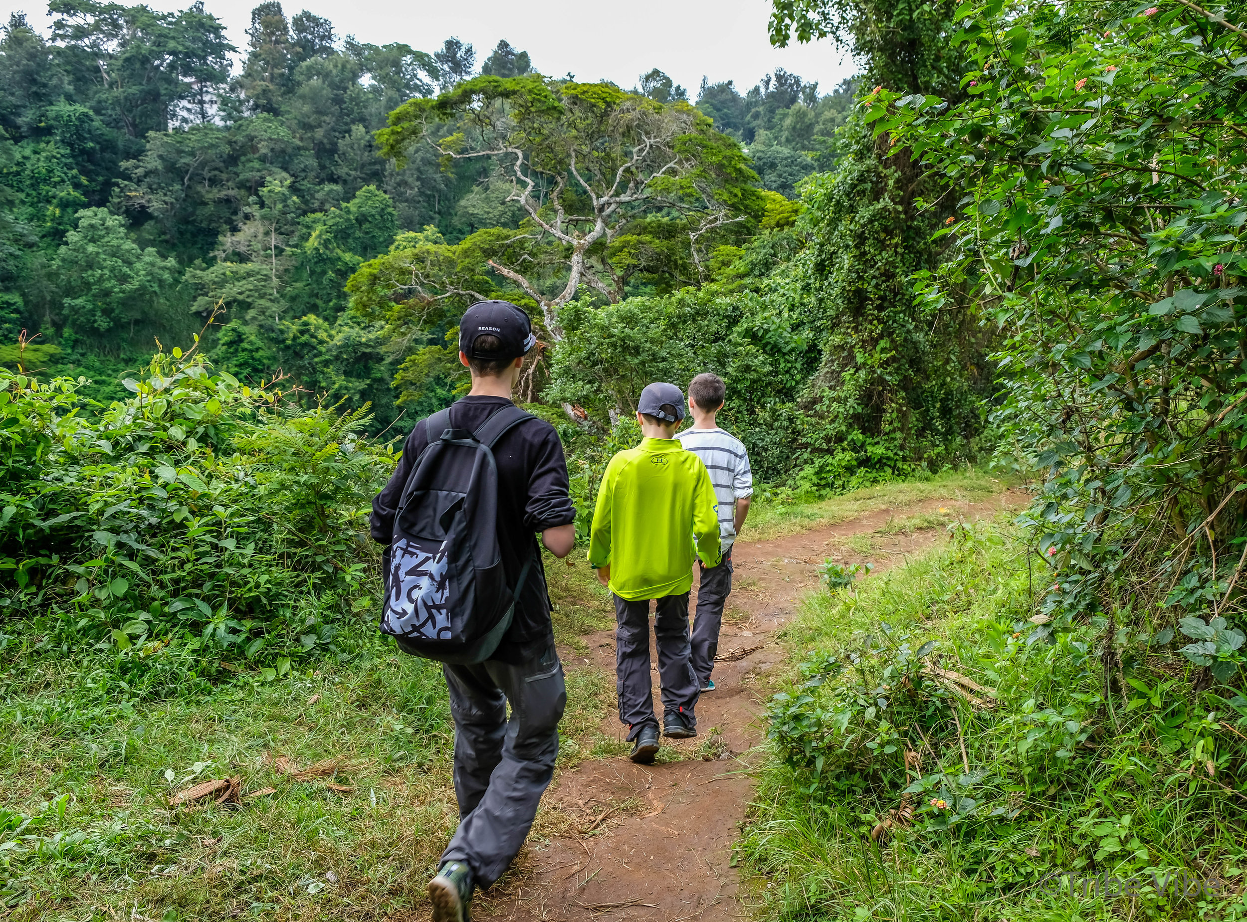 Machame walking trail to the bridge, Kilimanjaro.jpg