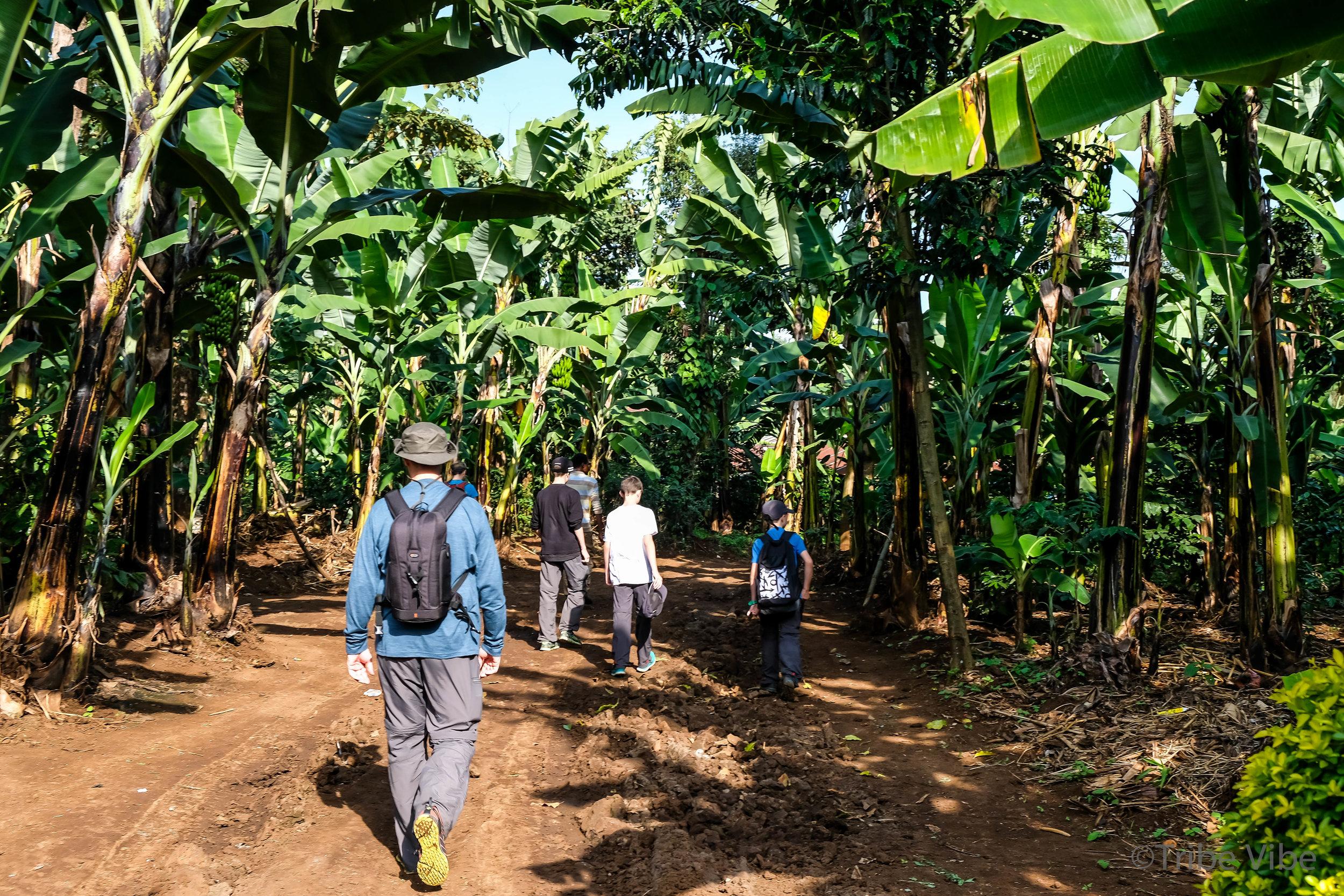 walking back through forest, kilimanjaro 3.jpg