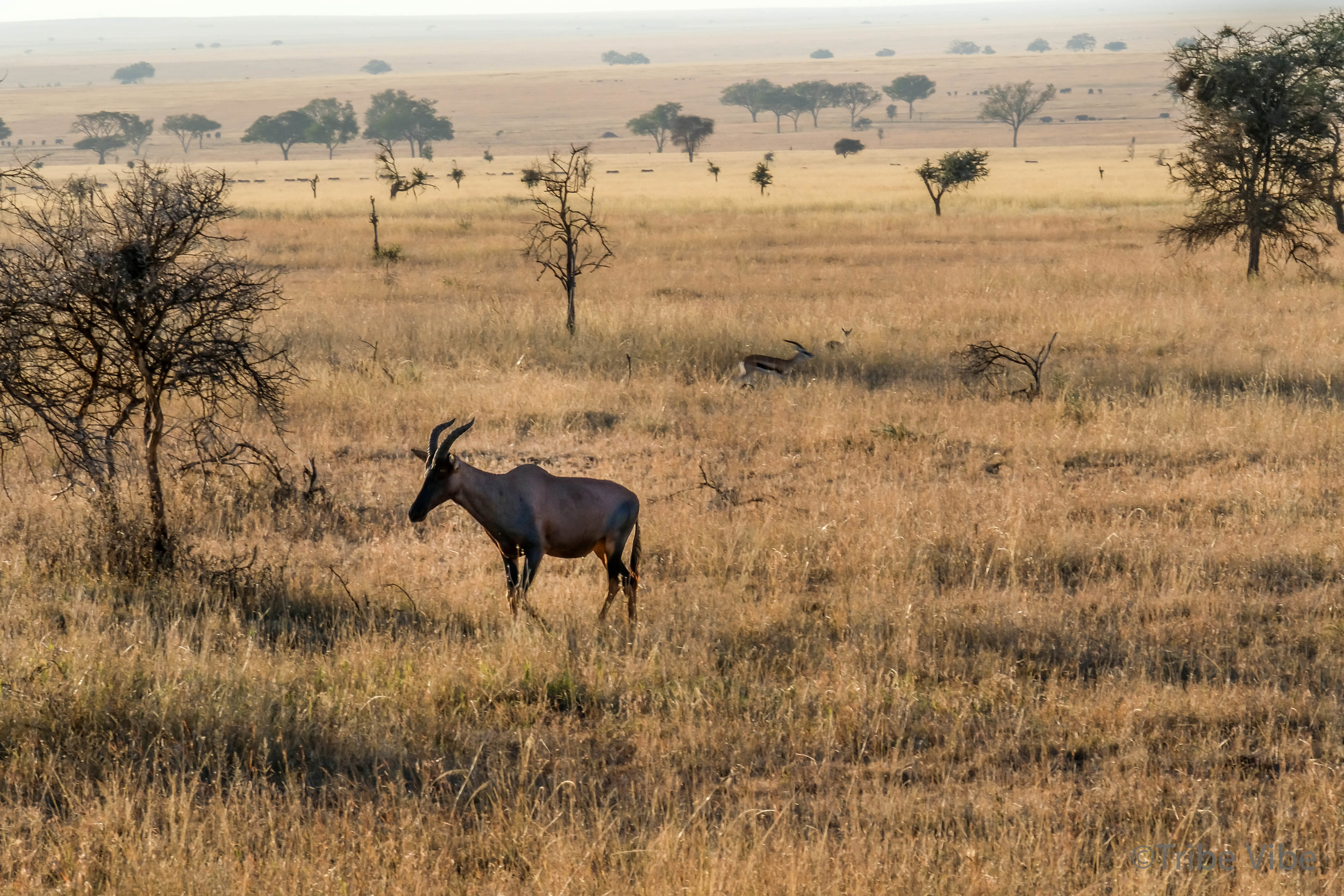 gazelles-7.jpg