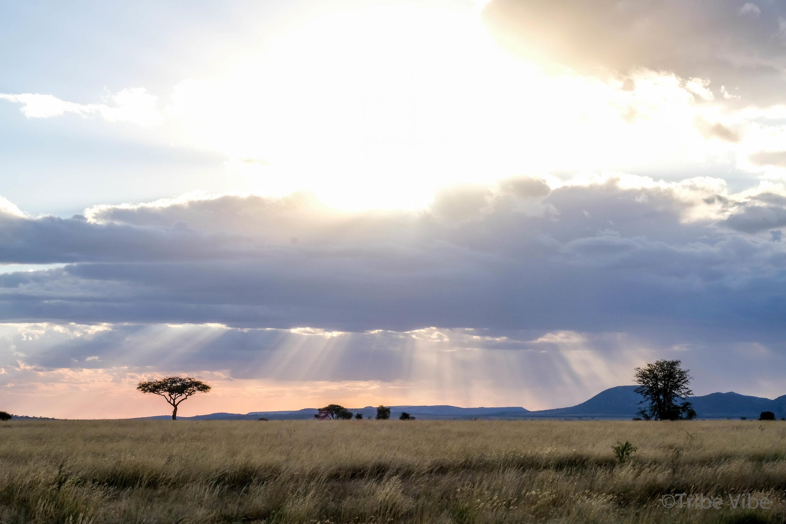 The beautiful landscape of the Serengeti