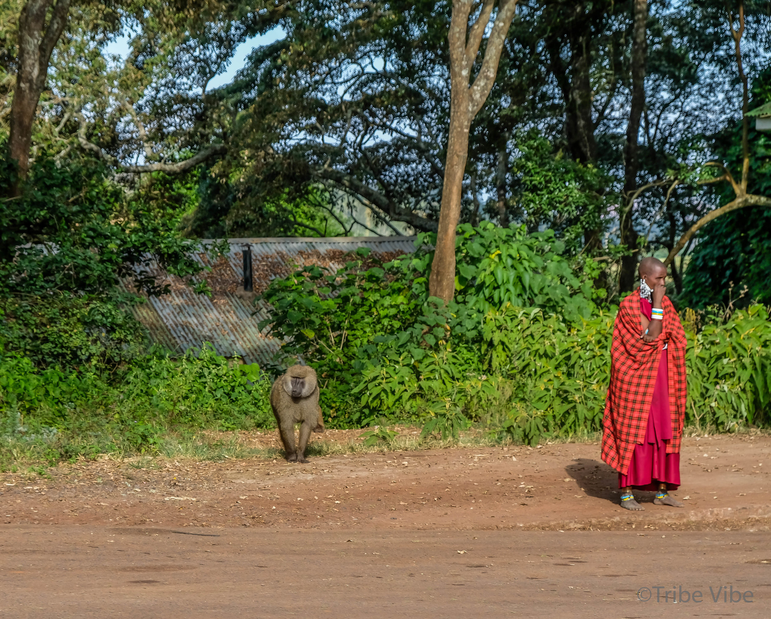 Massai woman and baboon standing side by side but not acknowledging each other.