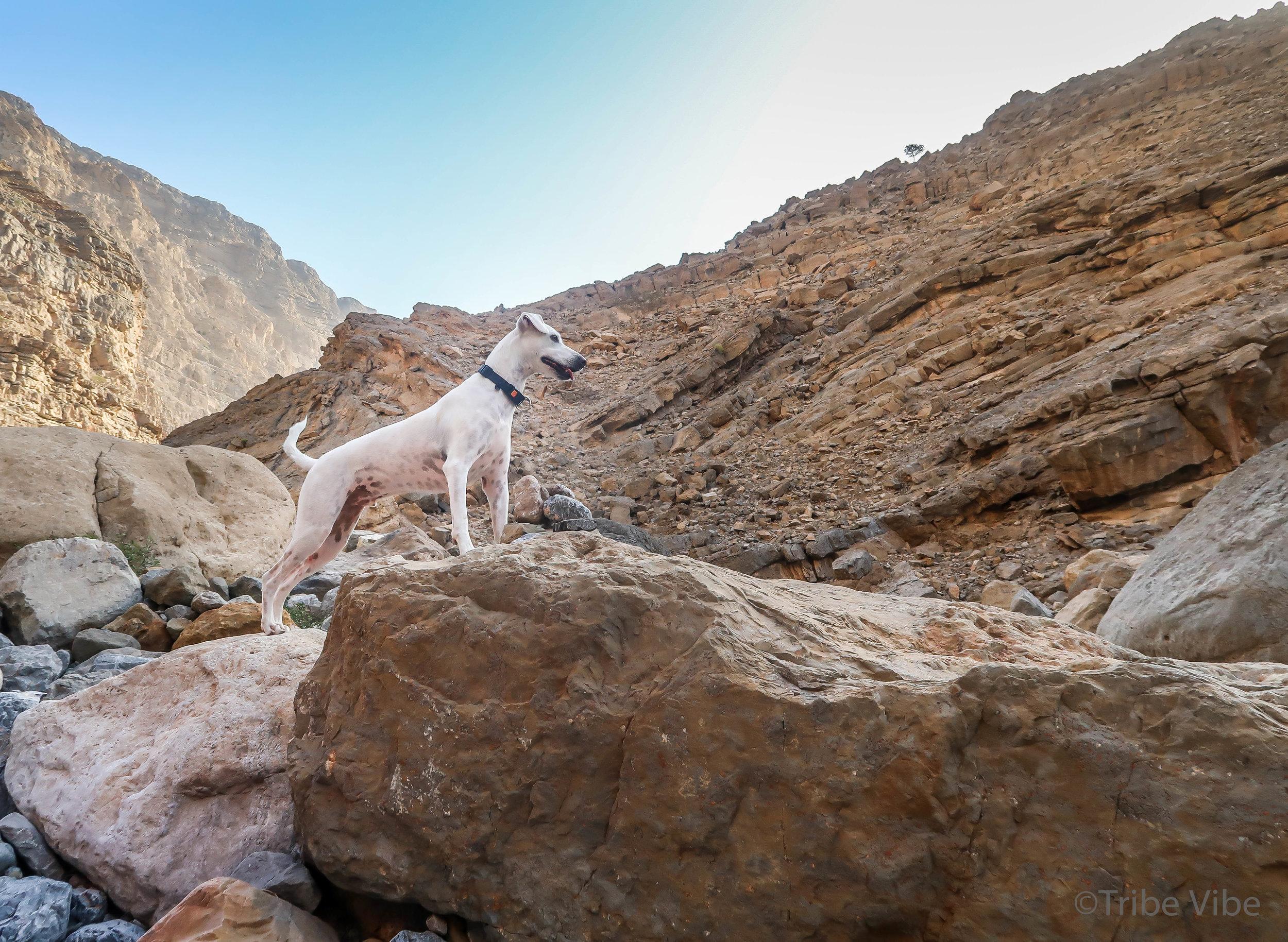 Spice enjoying his adventure in RAK