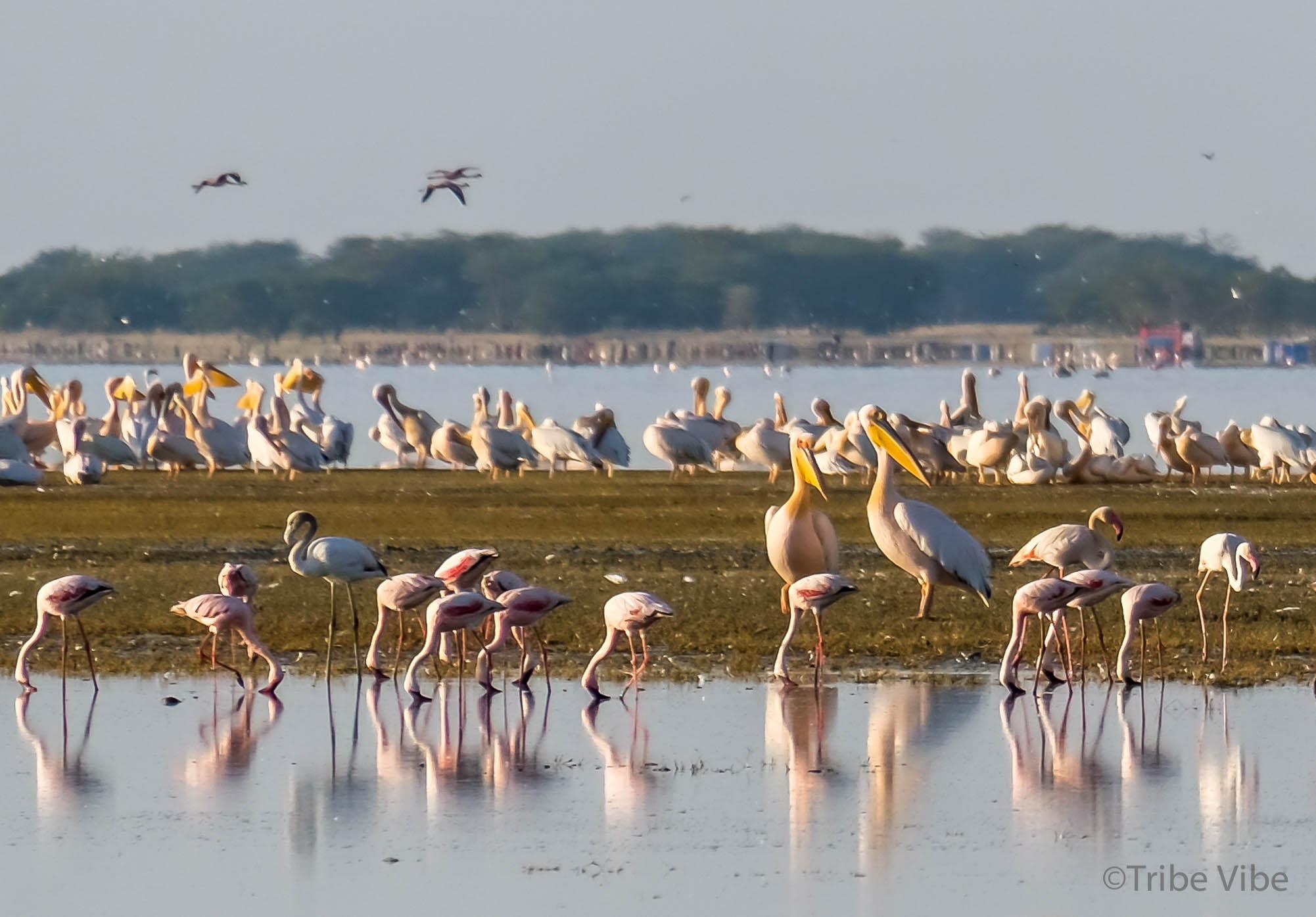 Lake Manyara birds, Tanzania35.jpg