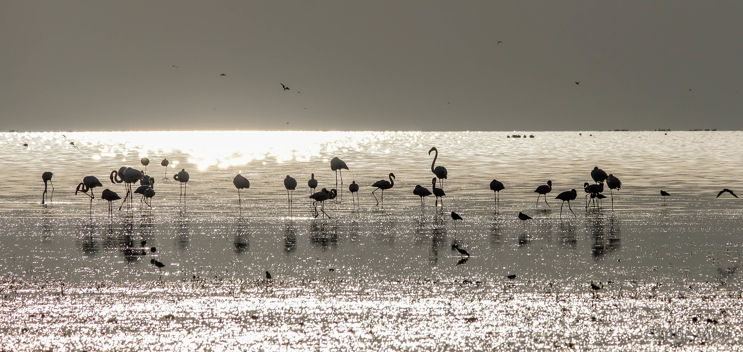 Lake Manyara birds, Tanzania30.jpg