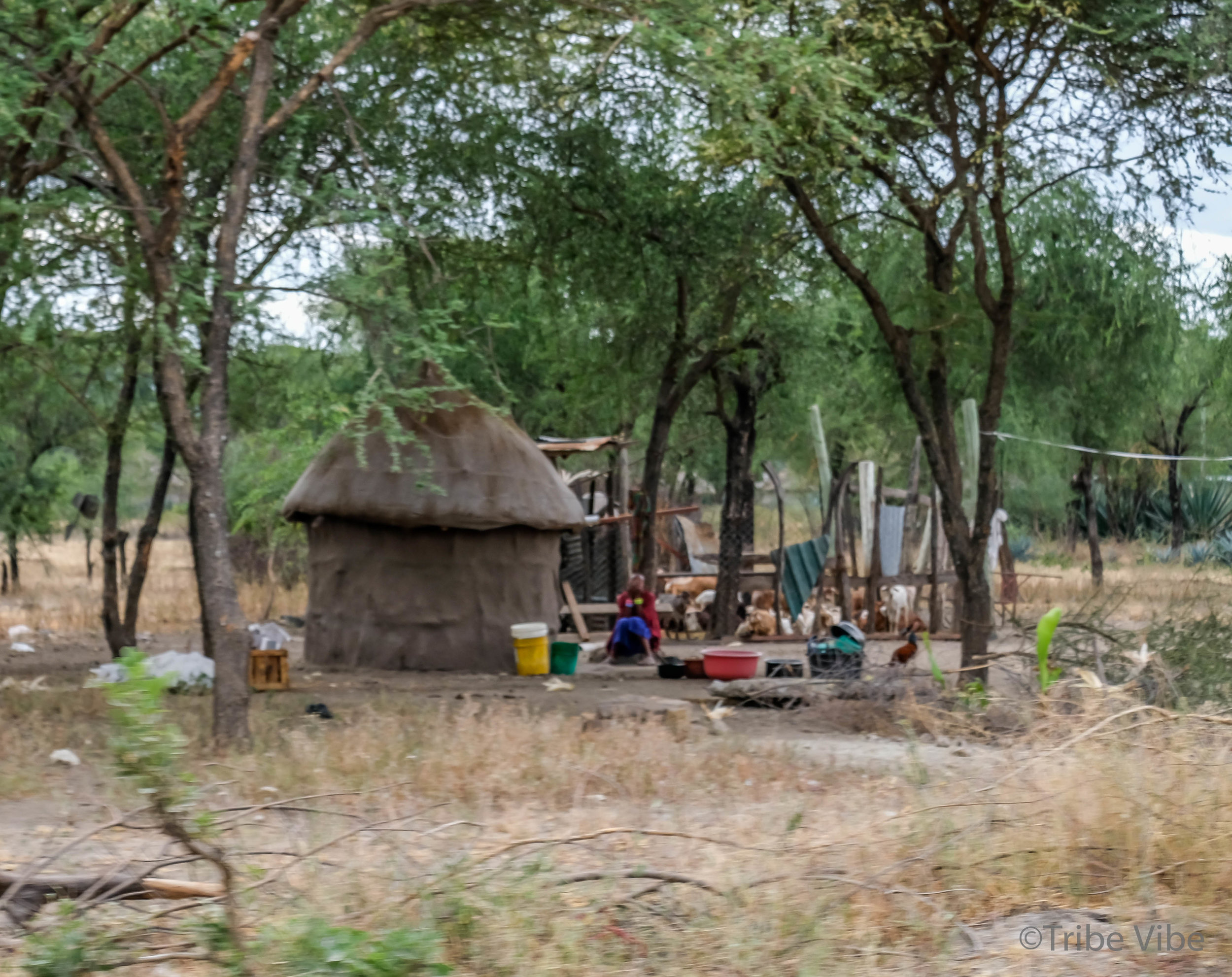 Masai Boma, Tanzania3.jpg
