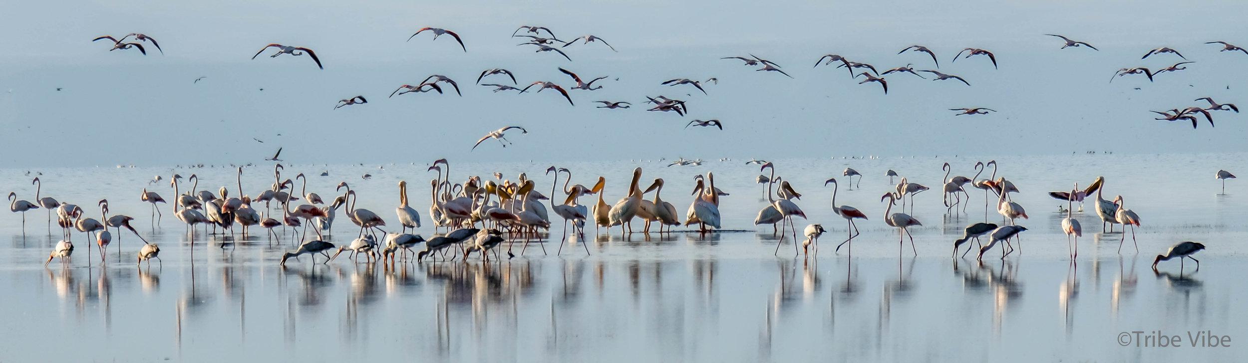 Lake Manyara birds, Tanzania34.jpg