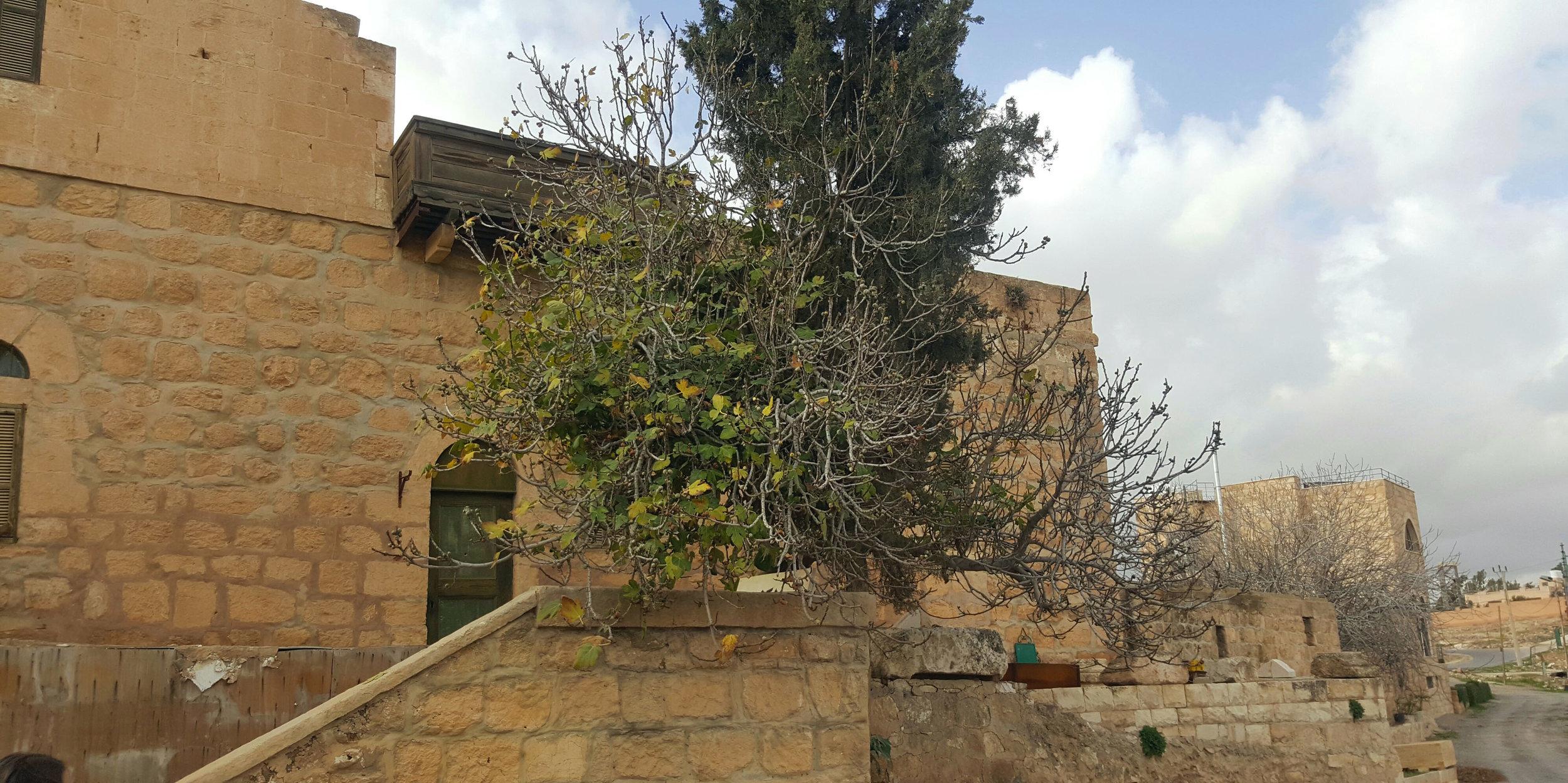 The oldest known built house in Jordan, la Yazal,  in  Um el Kundum area (or mother of grain in Aramaic)